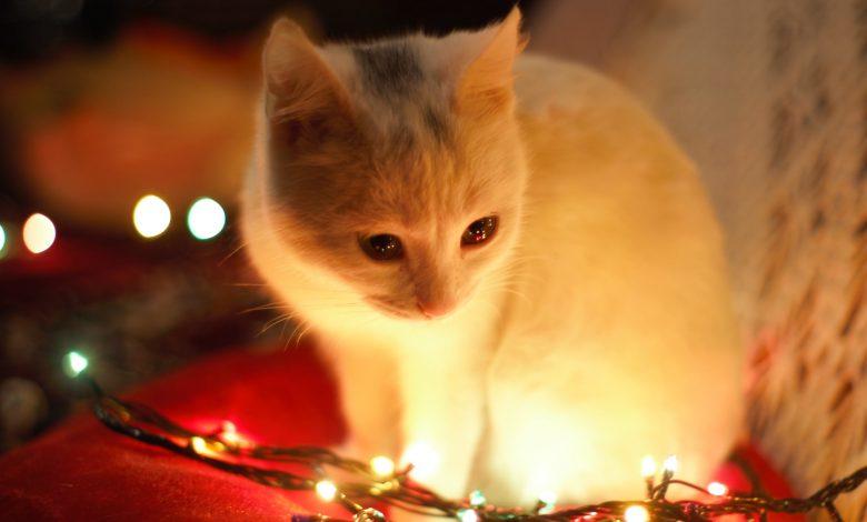 Photo of Handig: zet je kerstverlichting op een timer