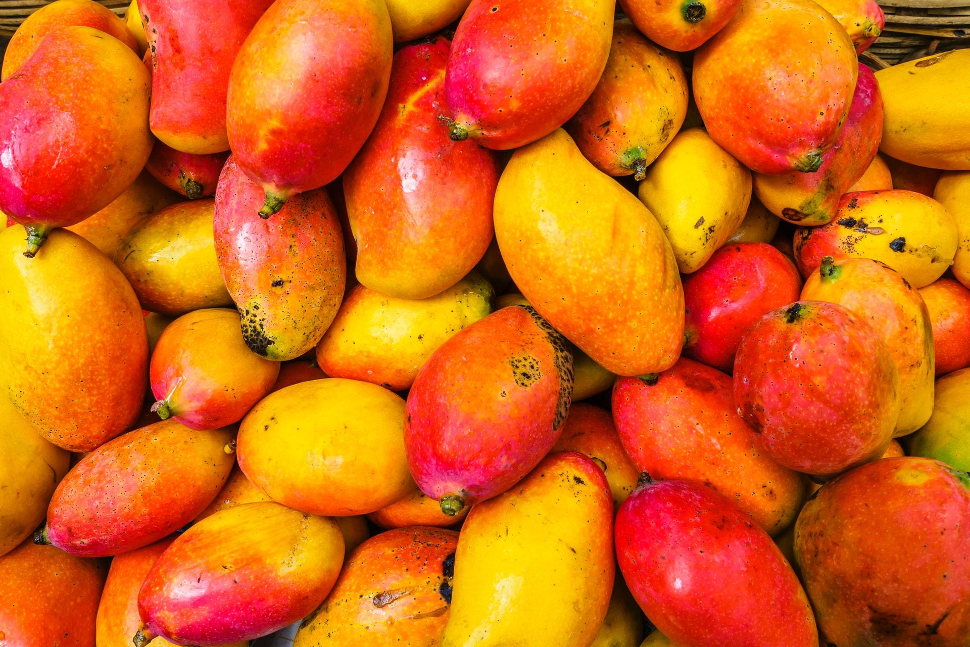 onderhoud van mangohout