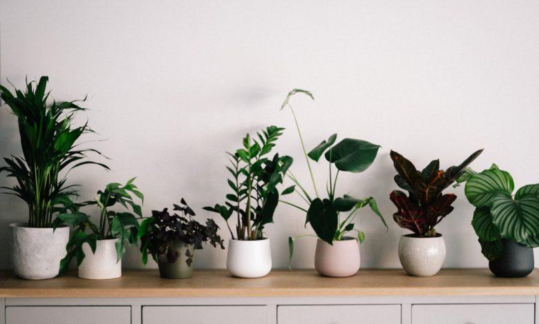 Photo of Planten water geven tijdens vakantie