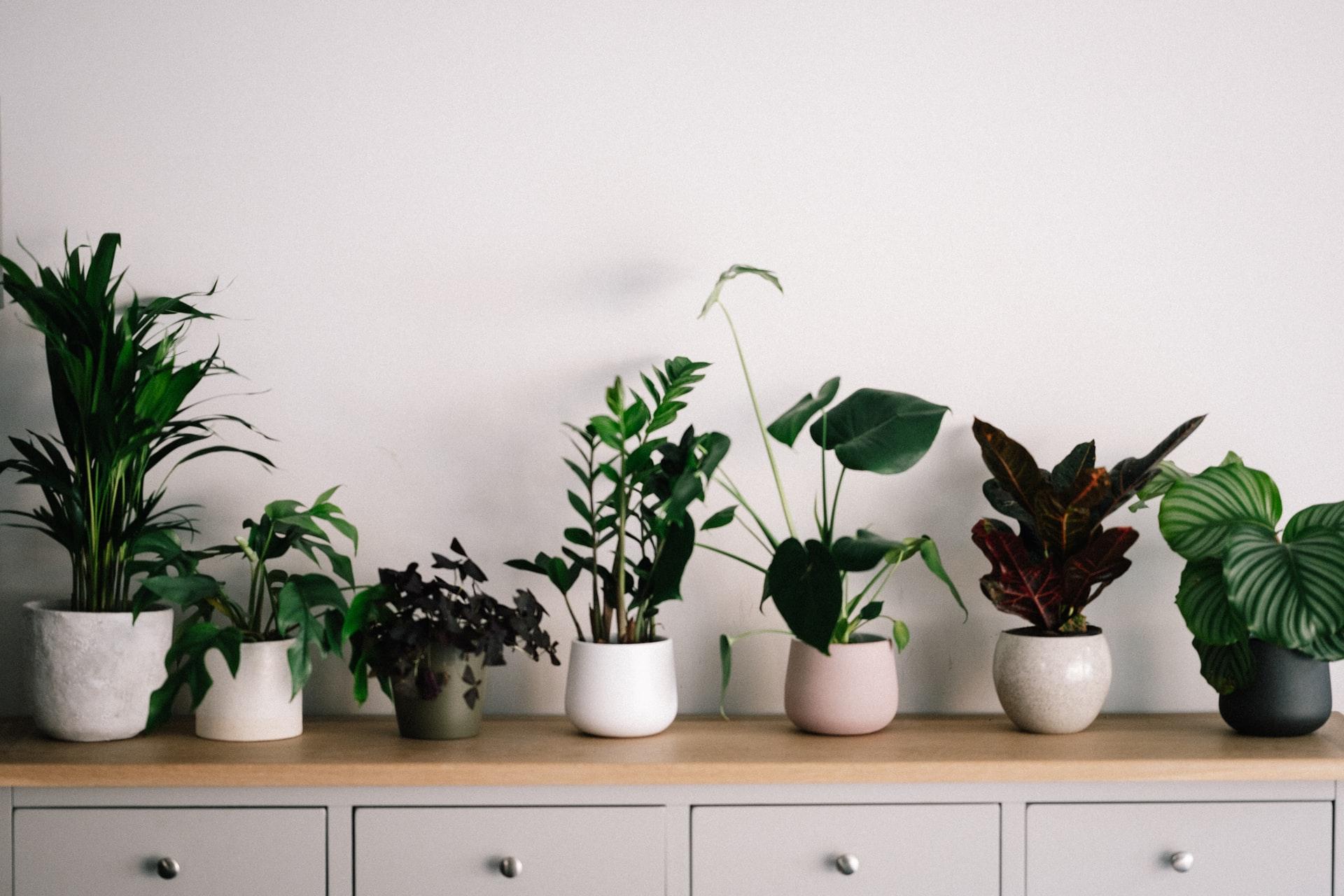 planten water geven tijdens de vakantie