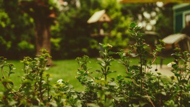 Photo of 5 Tips voor een sfeervolle tuin