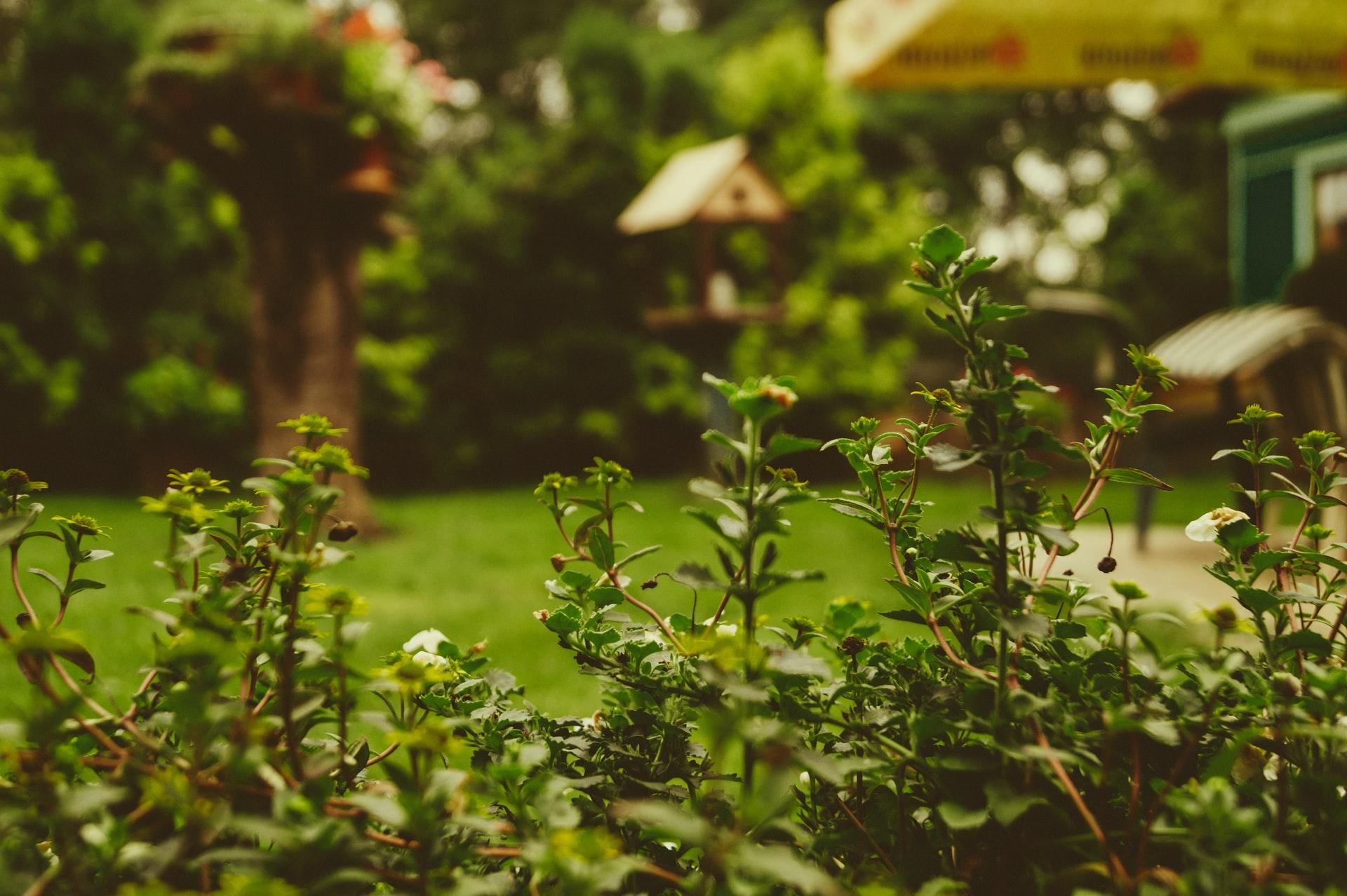 gezelliger in je tuin