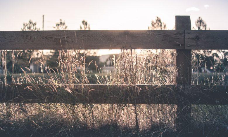 Photo of Je tuin afbakenen met een hek