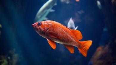 Photo of Het beste vijvervisvoer van dit moment