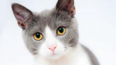 Photo of Verschillende soorten kattenverjagers
