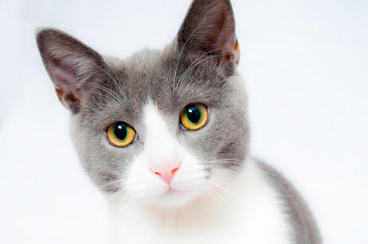 kattenverjagers