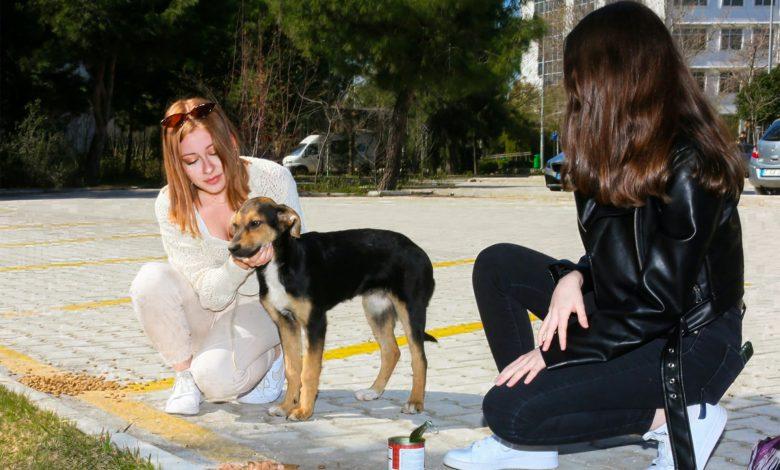 Photo of Waarom graanvrij hondenvoer? 5 Redenen!