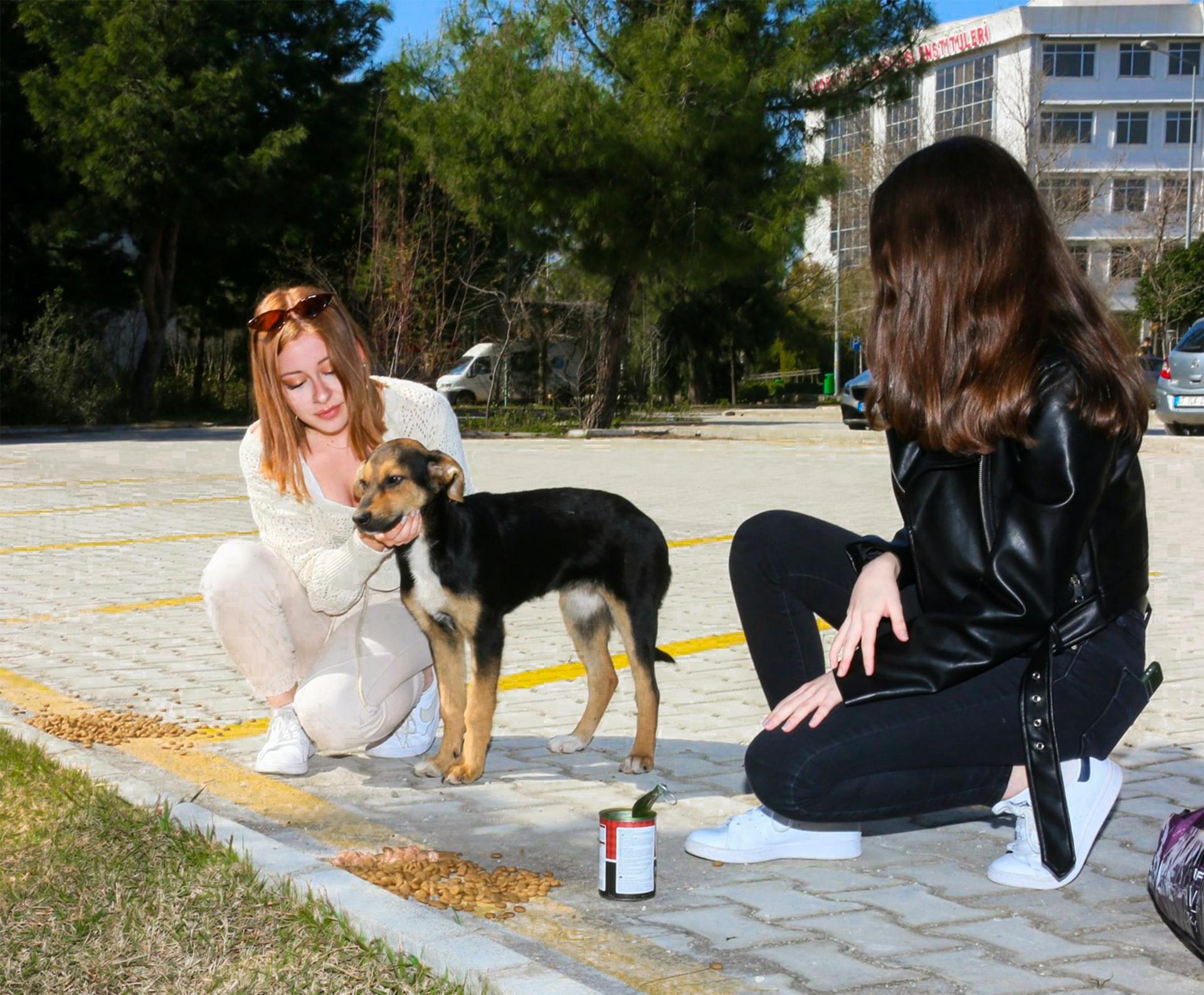 graanvrij hondenvoer