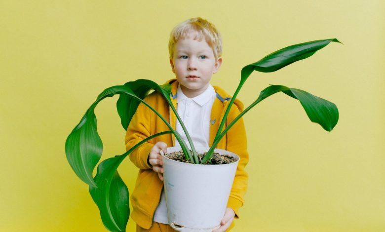Photo of Voeg wat groen toe in je huis door kamerplanten